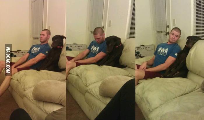 Like Master Like Dog