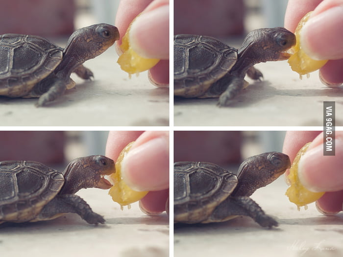 Happy tiny turtle.