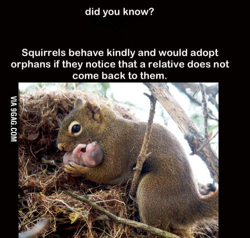Good Guy Squirrel