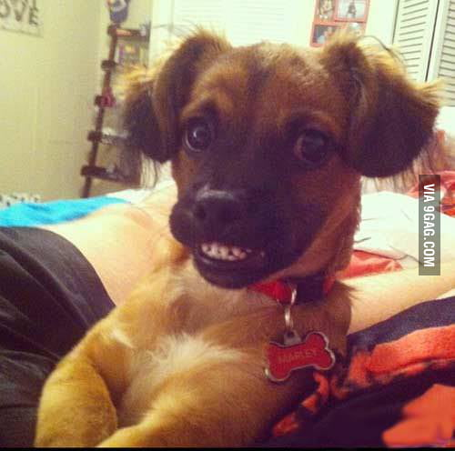 Ridiculously photogenic Dog !!