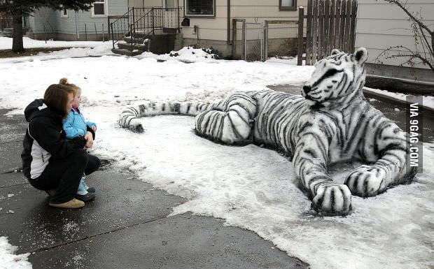 Snow tiger on the street!