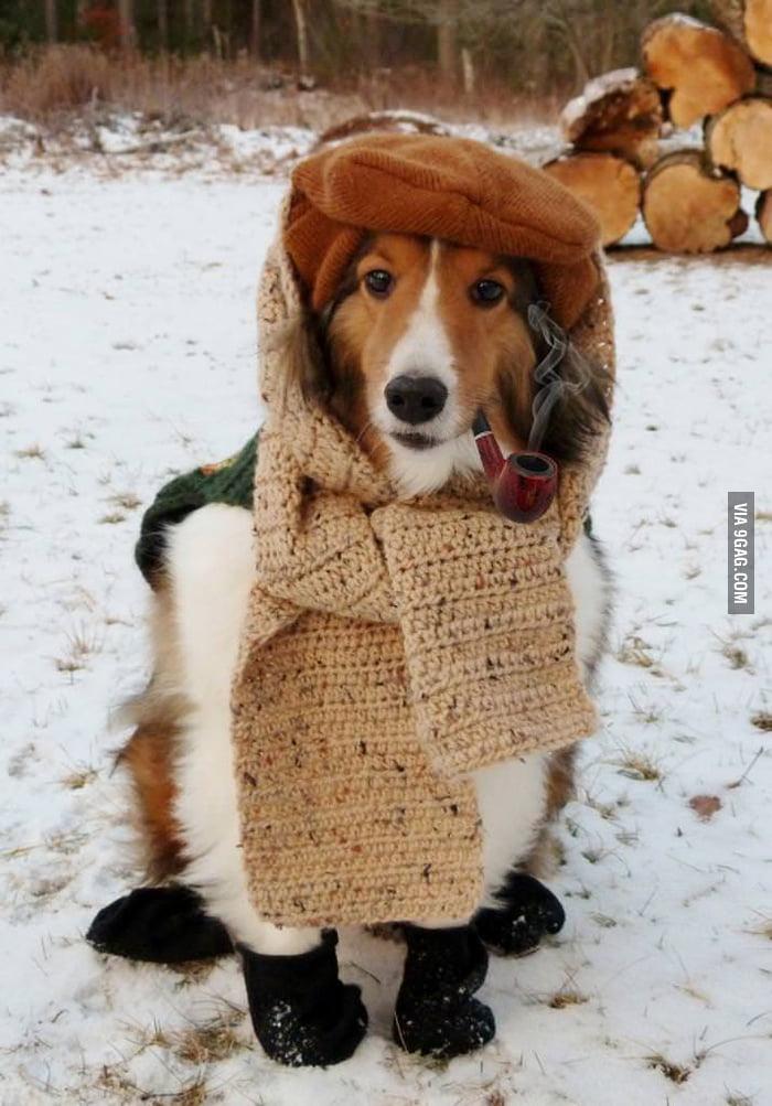 Dogs in Siberia