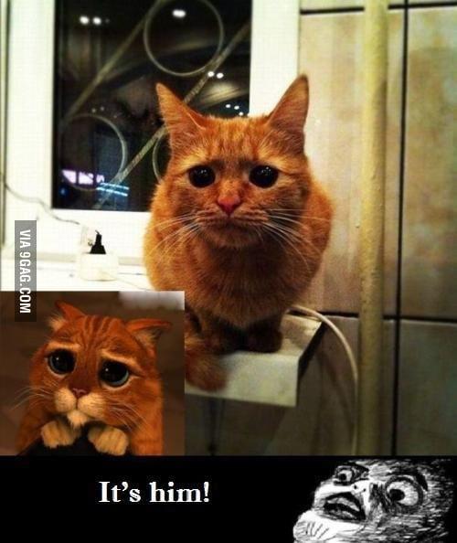 It's Really Him!