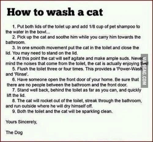 How to wash your cat.