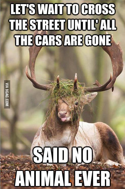 Derp Deer