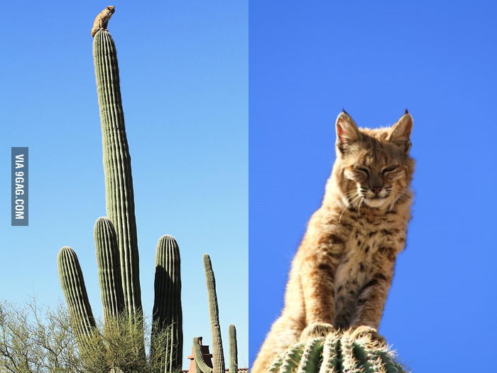 Lord of the Cacti looks down on you from his spiny tower