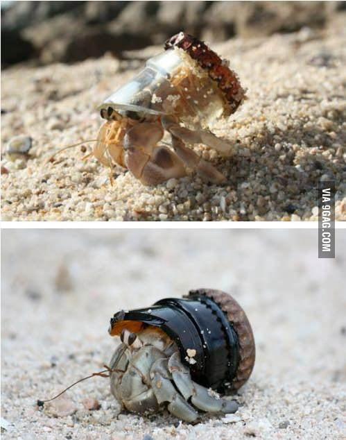 Nice shell dude
