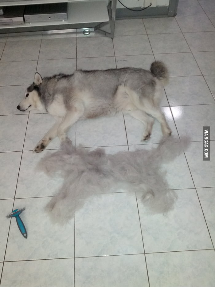 10 mins of grooming and I created another dog.