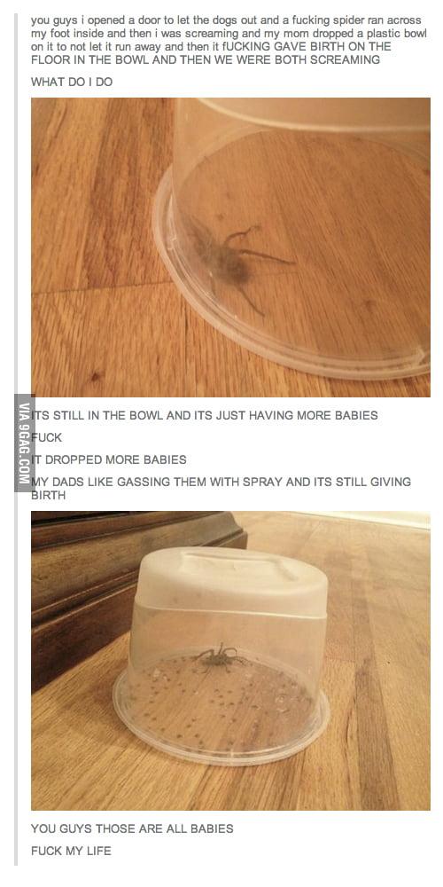 Bad Spider