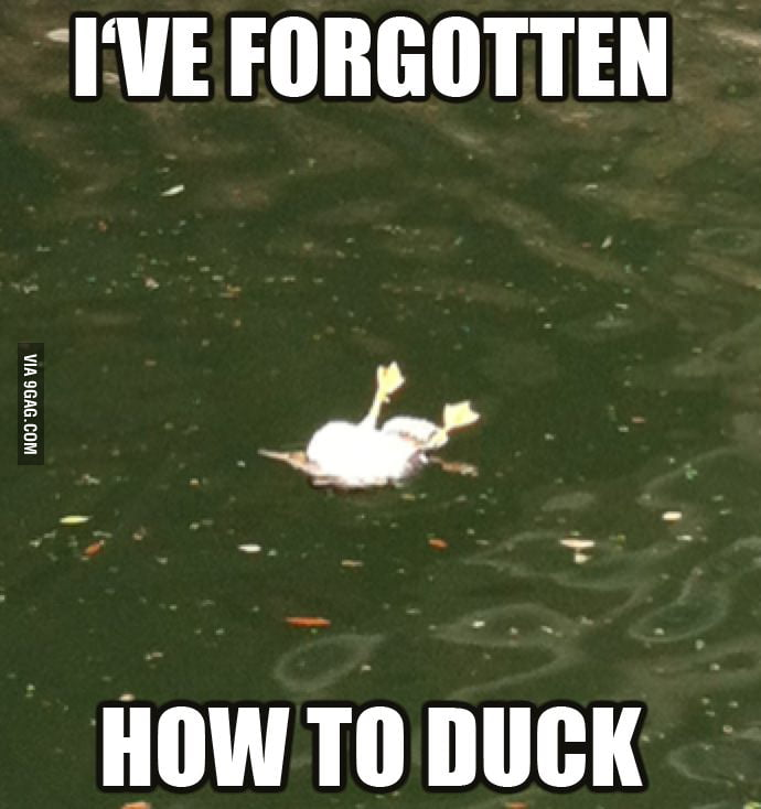 Forgotten how to duck...