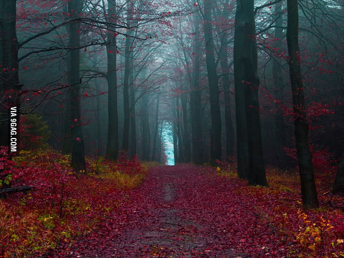The Black Forest (Germany)