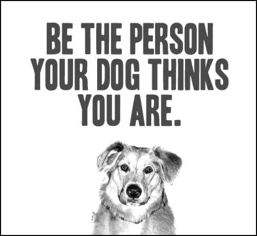 Pet Wisdoms
