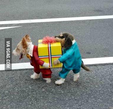 Best costume yet!