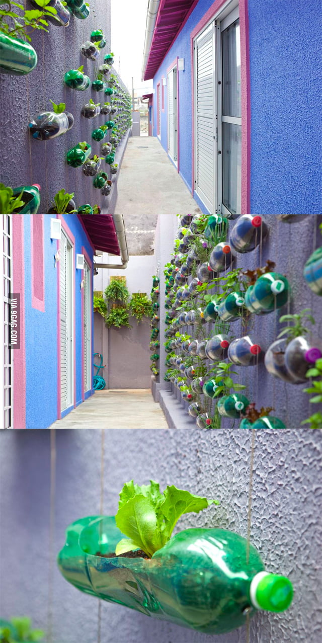 Vertical garden in Brazil