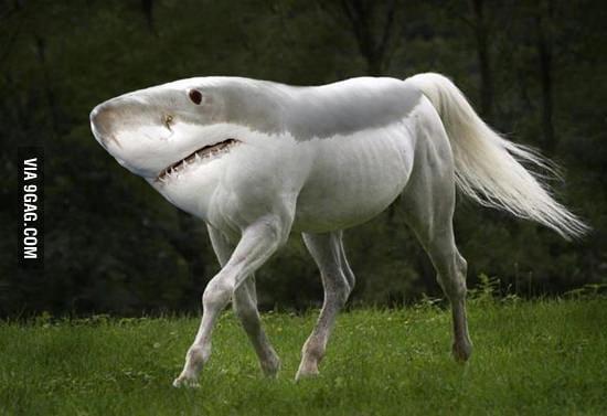 Walking sharks..what?