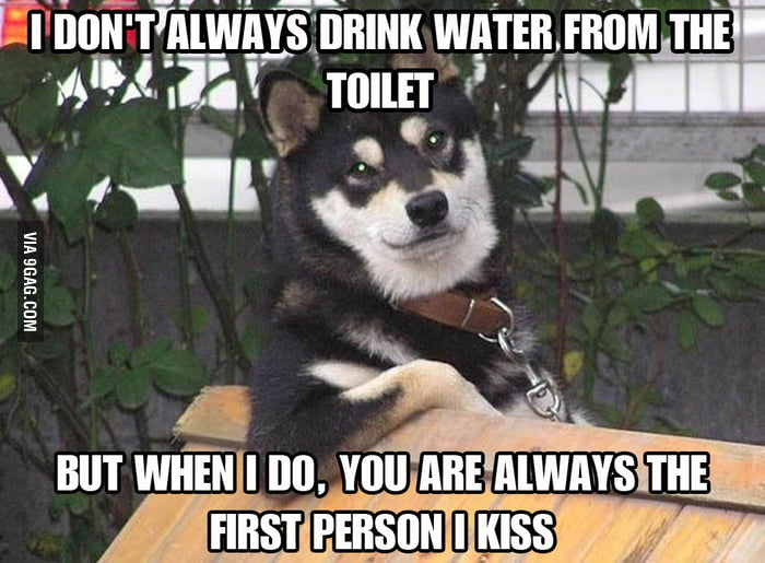 The most interesting dog in