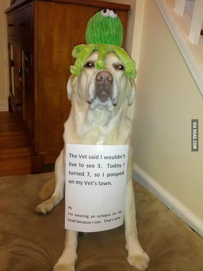 Octopus dog