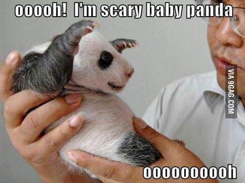 Baby panda power!