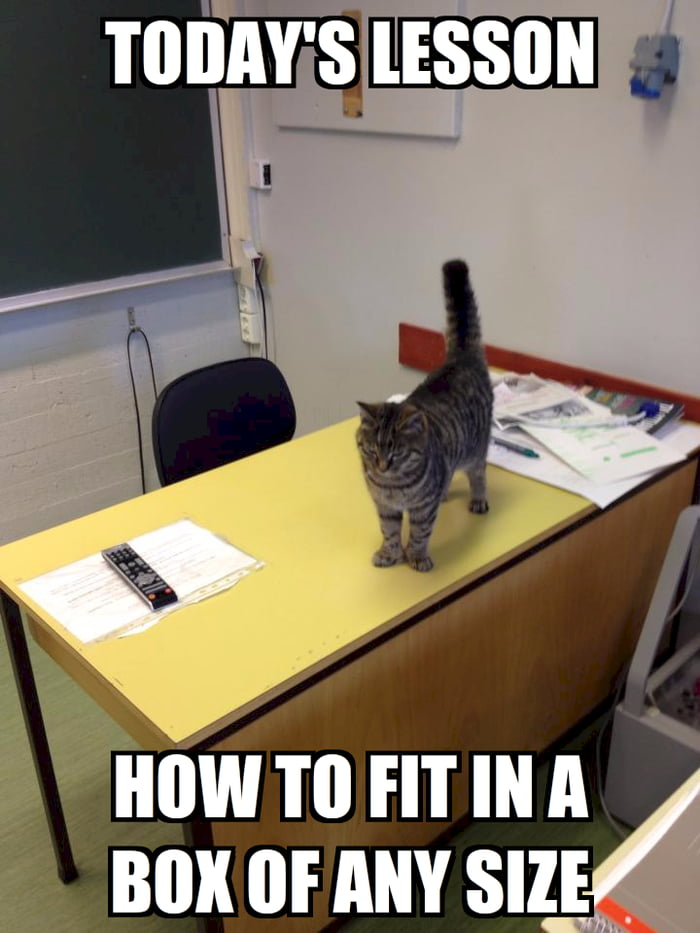 Today's Lesson with Professor Cat