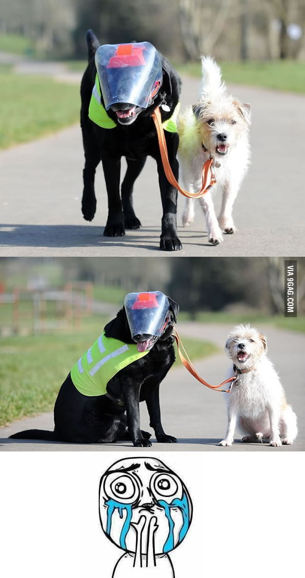 Blind Dog With His Own Guide Dog
