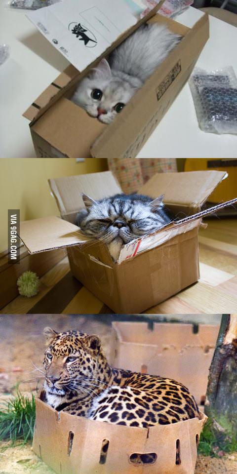 I'm still a cat.