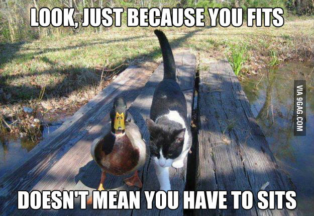 Actual advice mallard meets cat