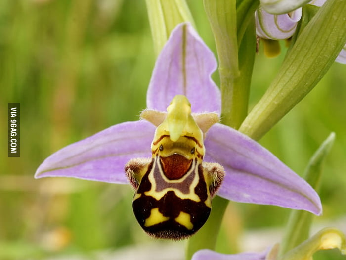 Happiest orchid ive ever seen