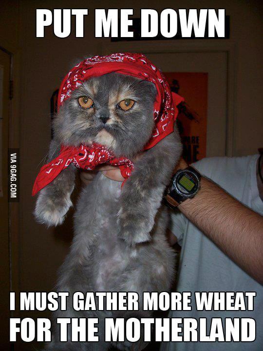 Soviet Cat