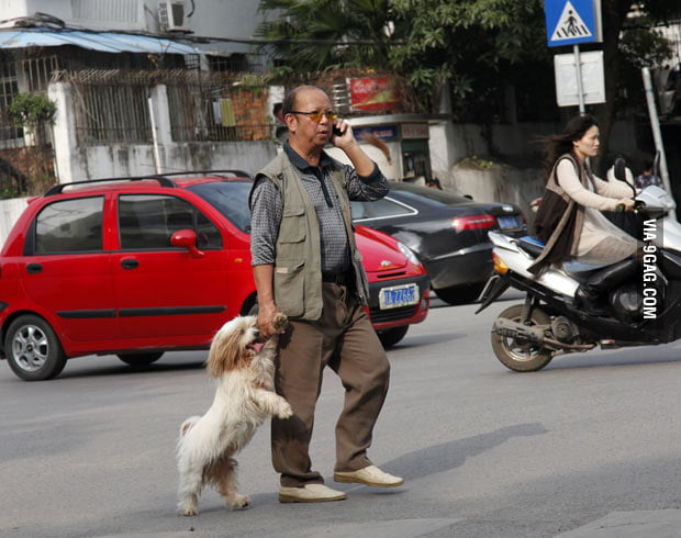 This dog offered its paw to be held when crossing road