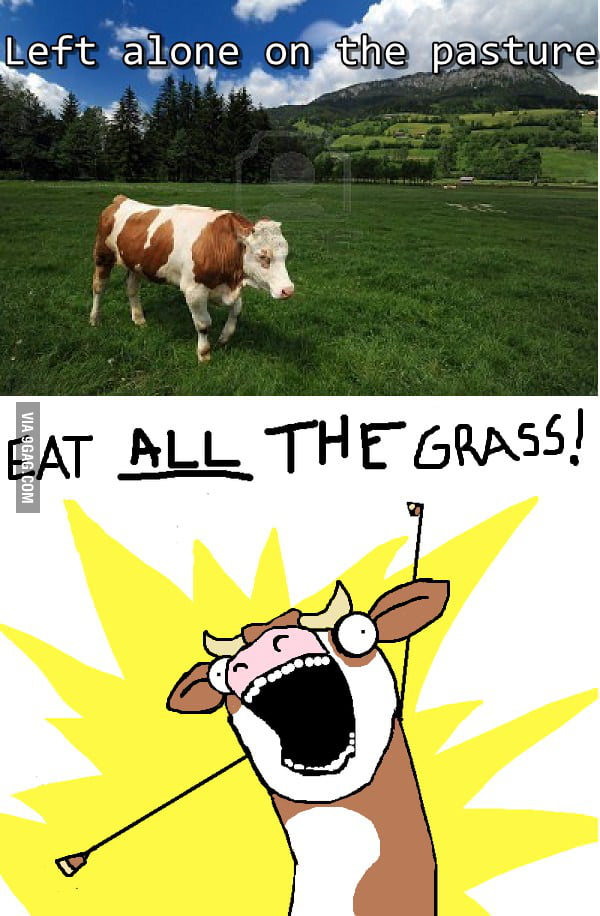 Cow's dream