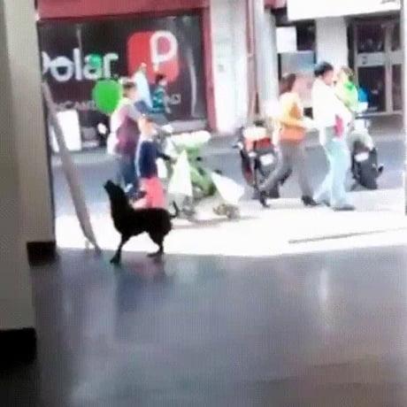 Dog having fun with balloon
