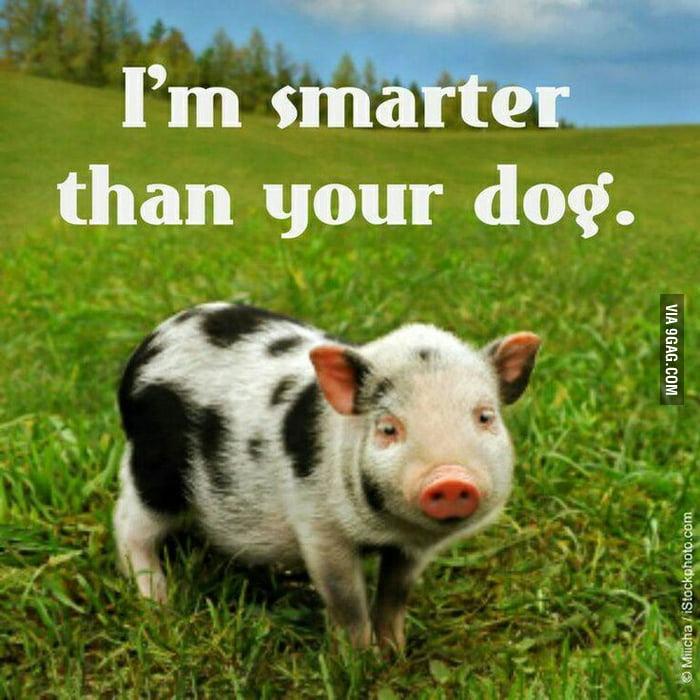Smart Points Hot Dog