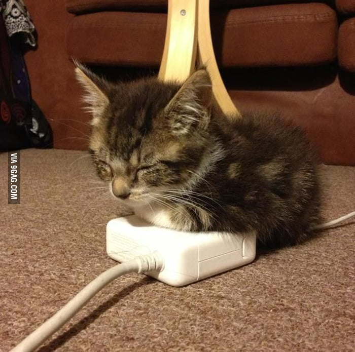 Just a kitten warming up.