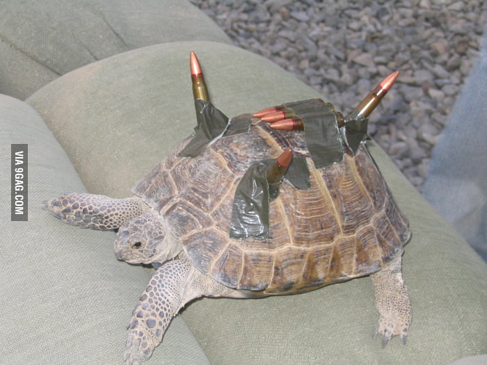 Real Combat Turtle! - ...