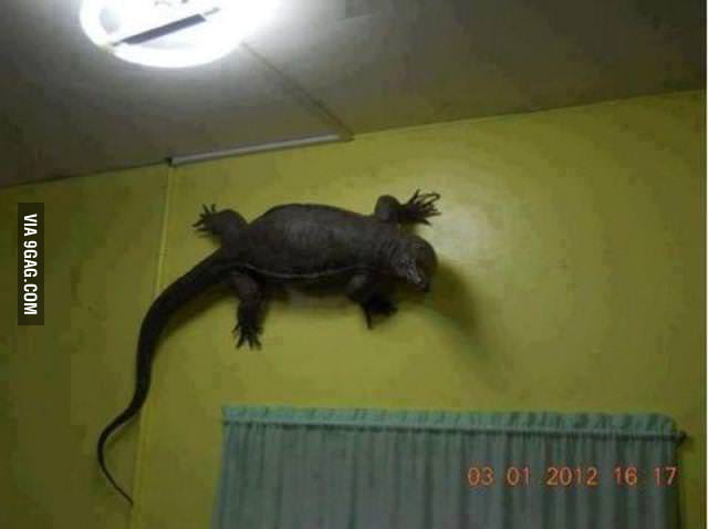 Because house lizard are too mainstream