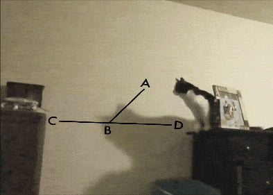 Cate calculates the perfect jump.