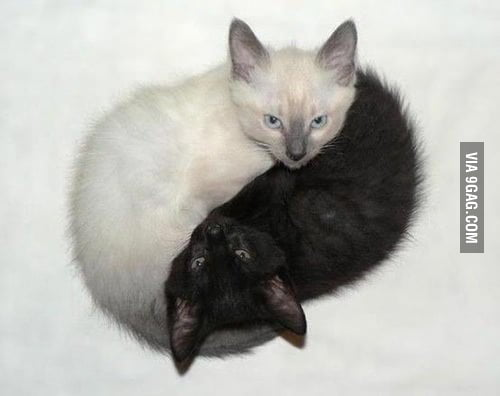 It's Yin & Yang!
