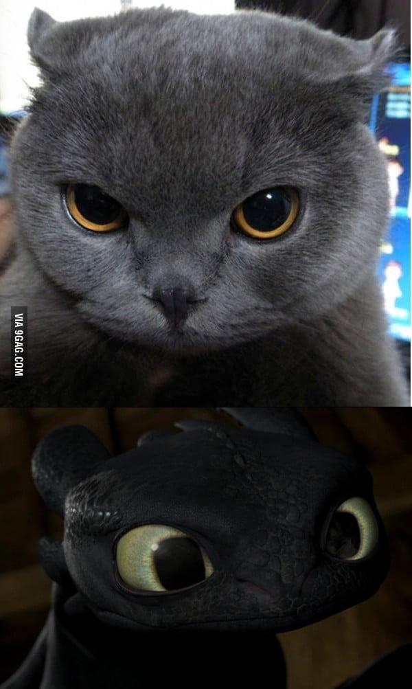 calming drops for cats