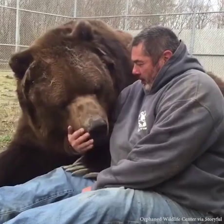 Grizzly viciously tears man apart! Graphic