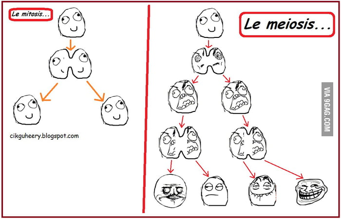 Meiosis vs mitosis funny on mitosis versus meiosis worksheet answers