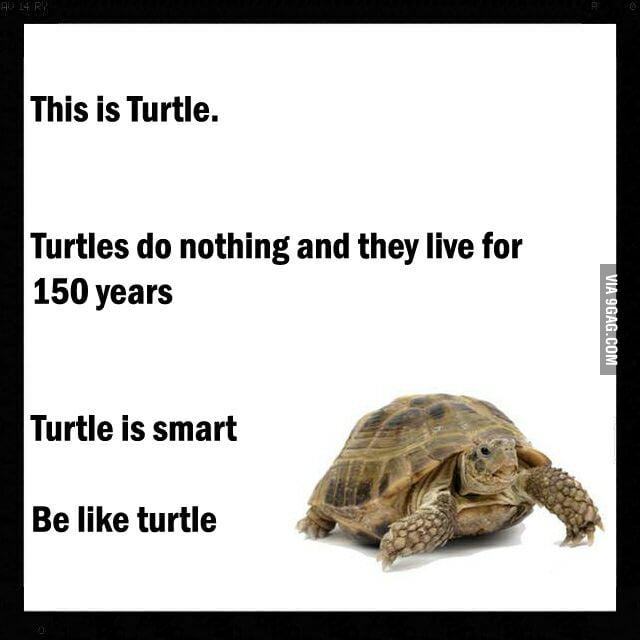 Do nothing like Turtle...