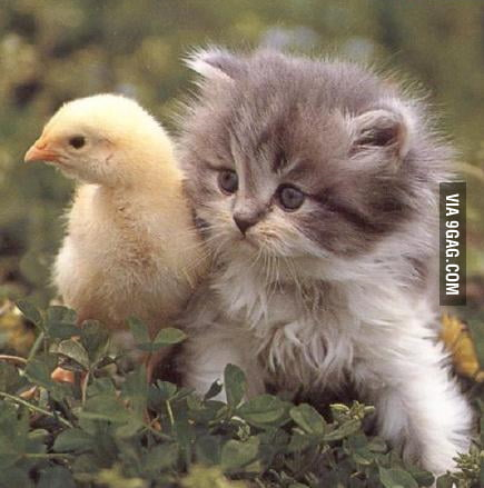 Cute chick with hairy pussy - 9GAG