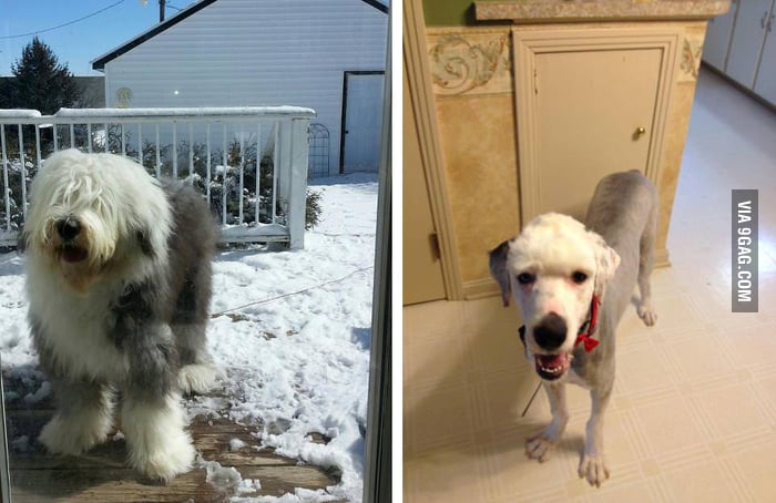 I think the groomer gave me back the wrong dog.