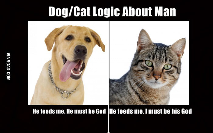Why Dog Is Better Than Cat
