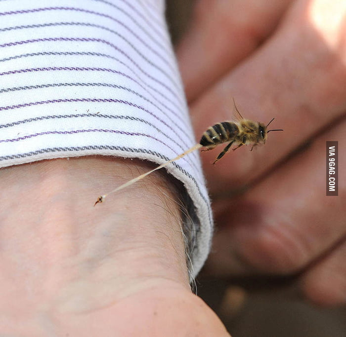 The final seconds of a honey bee's life.