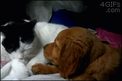 Puppy gets cat kisses.