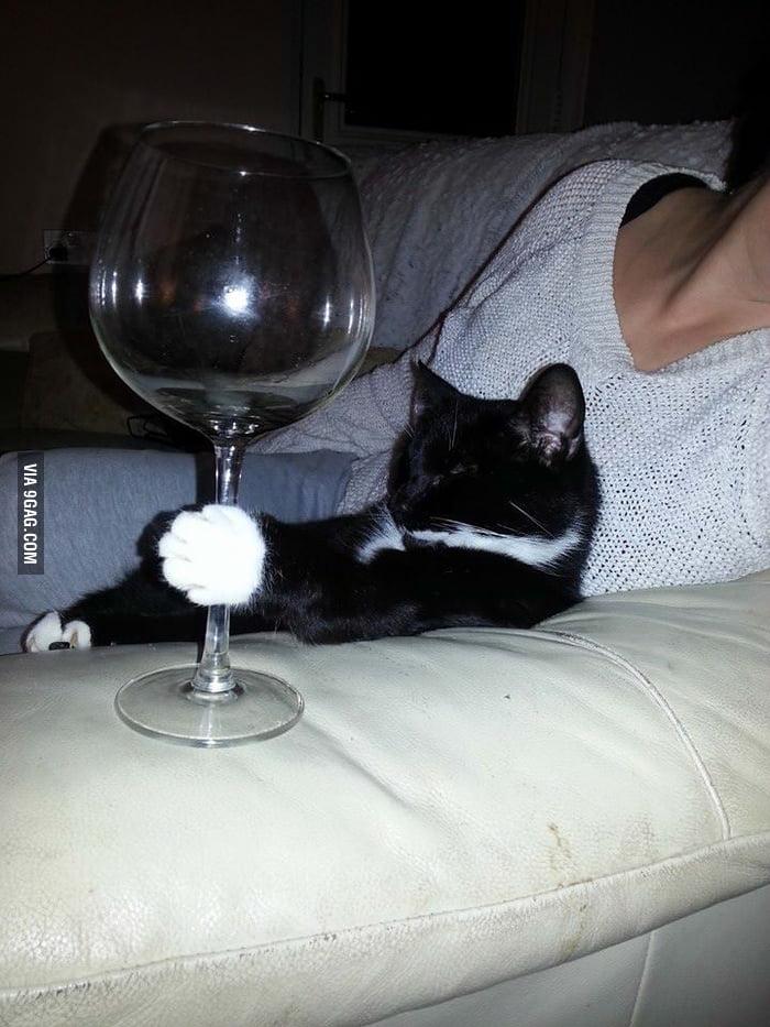 Sophisticated cat