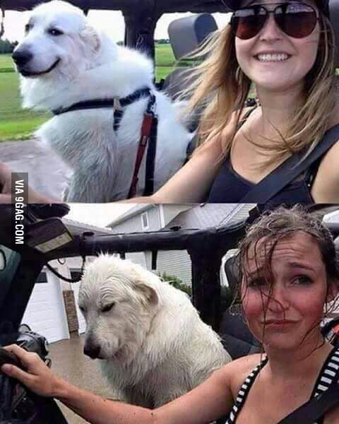 The dogs face