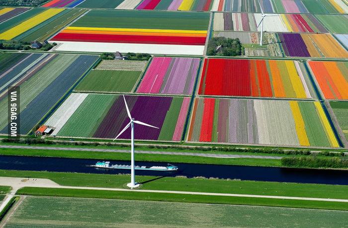 An aerial view of a Dutch Tulip farm, truly sublime.