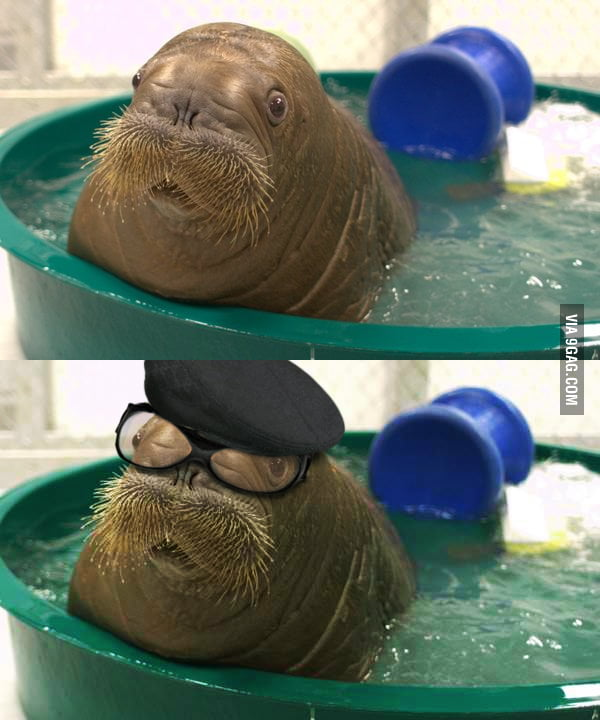 This Baby Walrus Looks